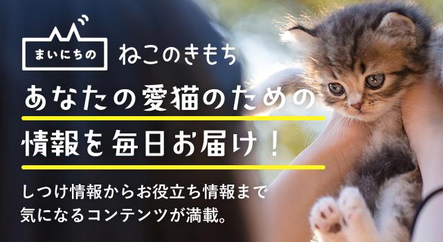 あなたの愛猫のための情報を毎日お届け